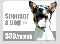 Sponsor a Rescue Dog