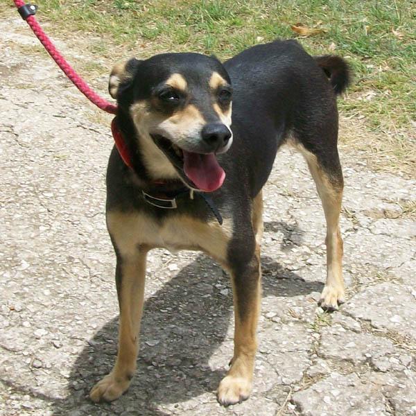 Ark Dog Rescue Barbados